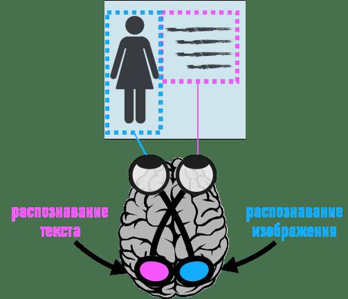 Мозг Гемисферы- информационная обработка